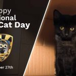 (Universal) October 27th National Black Cat Daypsd-min