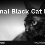 (Universal) October 27th is National Black Cat Day (1)-min