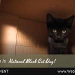 (Universal) October National Black Cat Day-min