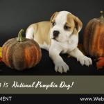 (Universal) October National Pumpkin Day (1)-min