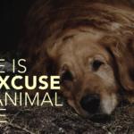 Animal Cruelty v3