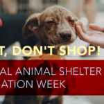 National Animal Shelter Appreciation Week